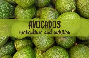 from avocado plant to nutrition facts