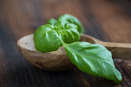 Basil for mosquito bite