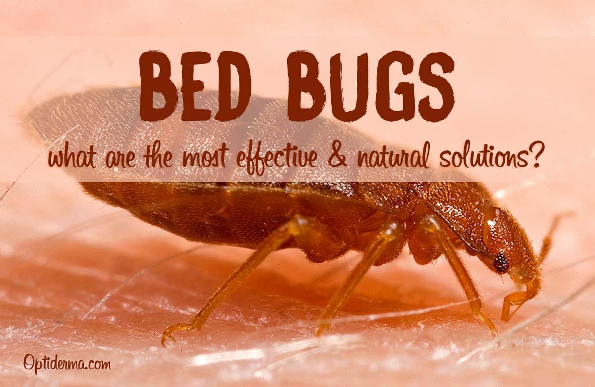 Best Bed Bug Natural Sprays