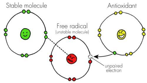 Free Radicals & Antioxidants