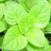 Herbal remedies for skin: oregano