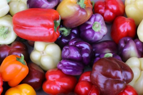 Purple Bells and other Bell Peppers
