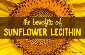 The Benefits of Sunflower Lecithin