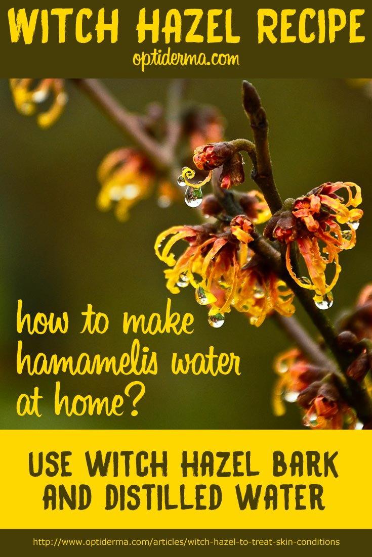 How to make witch hazel for psoriasis and eczema at home?