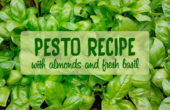almond basil pesto recipe