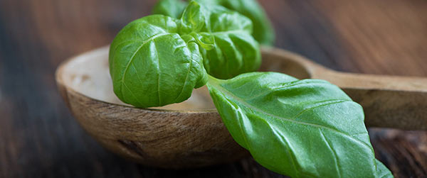 Basil for Itchy Skin