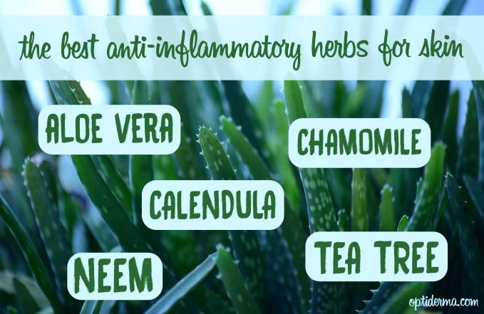 anti-inflammatory herbs for skin