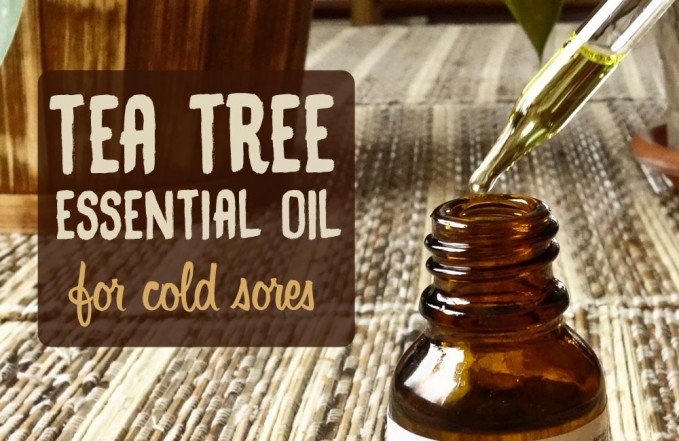 tea tree for cold sores