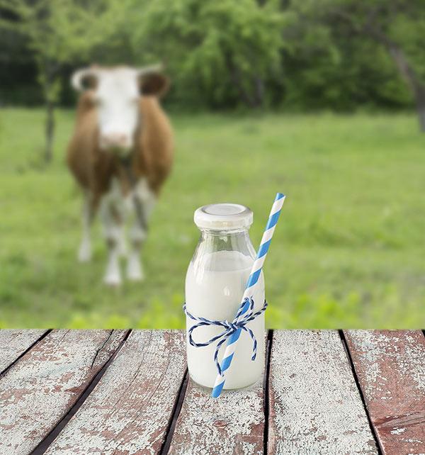 Baby Foods - Avoid Cow Milk