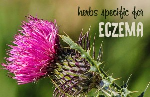 skin rash eczema herbs