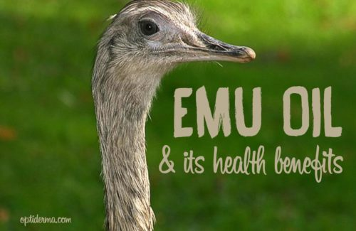 Where does emu oil come from?