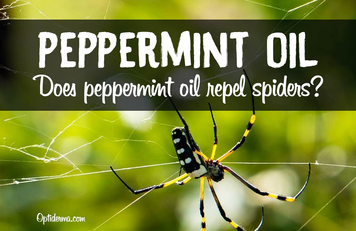 Peppermint Oil for Spiders
