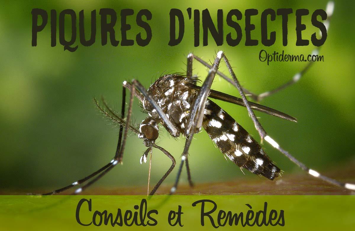 Piqûres d'Insectes qui Font Des Cloques : Remèdes et Conseils