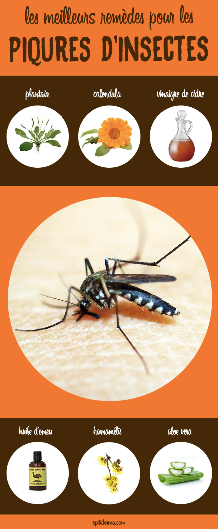 Les Meilleurs Remèdes Pour Soulager Les Piqûres d'Insectes