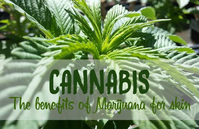 cannabis for skin
