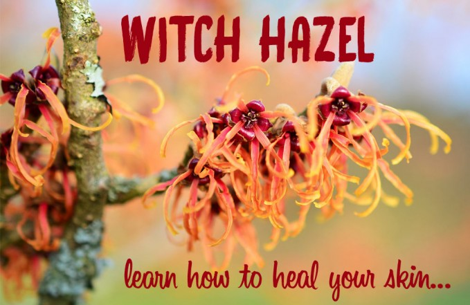 witch hazel for psoriasis & eczema